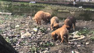 Little dogs eating 1
