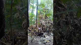 Pikat Kolibri Sogok Ontong Kamera Jarak Dekat
