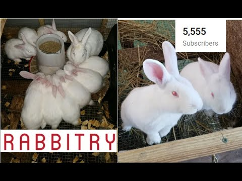 , title : '1-12-20 Best Way to Raise Rabbits You've Ever Seen. New Zealand Whites. High Production Method
