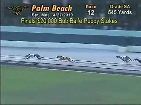 PBKC Bob Balfe Puppy Stakes