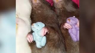 Эти спящие крысы слишком милы! 🌙 ❤️💤