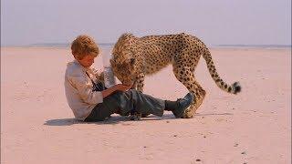 又一部高分电影,男孩捡到一只小猎豹,把它当成宠物狗来养!