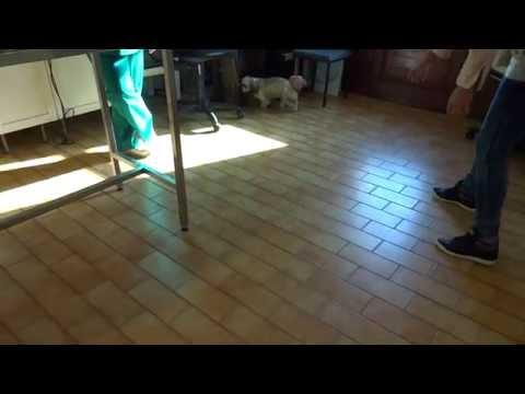 A csukló mozgásának helyreállítása törés után