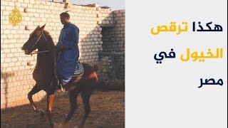ريف مصر.. هكذا ترقص الخيول