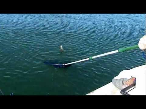 Εγγλεζικο ψαρεμα