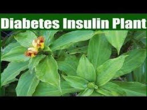 Rychlost imunoreaktivního inzulínu