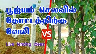 பூஜ்யம் செலவில் தோட்டத்திற்கு வேலி Live Fencing Ideas