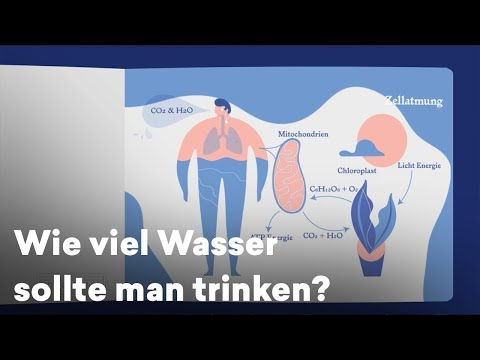 Trennwände Nussbaum von Prostatitis
