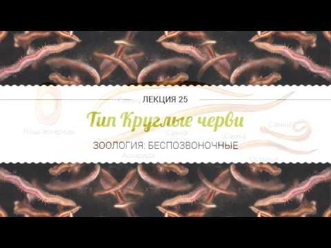 Лямблии в черном море