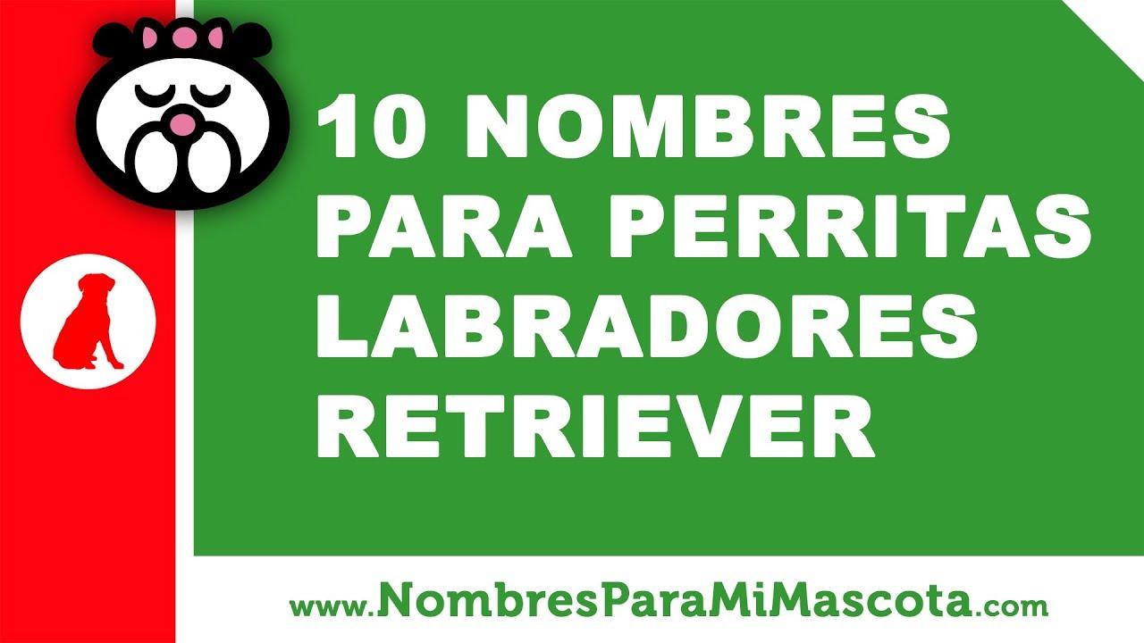 10 nombres para perritas labrador retriever - nombres de mascotas - www.nombresparamimascota.com