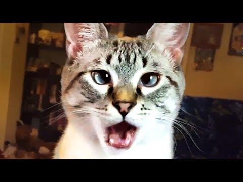 Divertidos Videos De Gatos Haciendo Travesuras