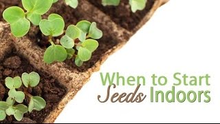 When to Start Garden Seeds Indoors & Tomato Plant Tips