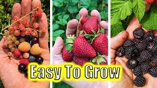 5 Easy To Grow Fruits! Garden Tips And Tricks