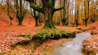 TWO HOURS of Relaxing Music - Meditation and Spa Music- New Age and Anti-Stress Music