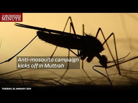Anti-mosquito campaign kicks off in Muttrah