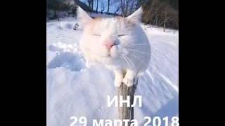 Соло мечтательного кота   муз  И Бутмана