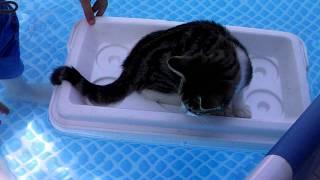 gato en la piscina