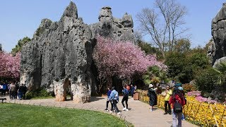 Video : China : The amazing Stone Forest (ShíLín 石林)
