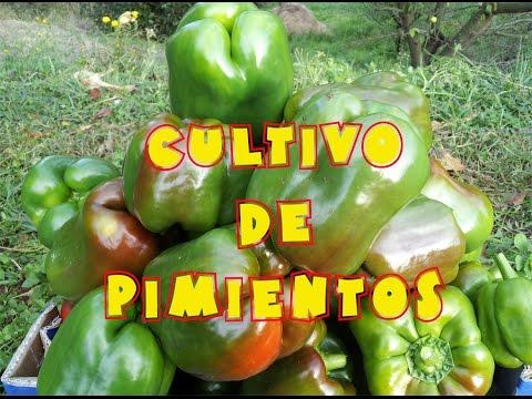 Nutrizione sana contro ricette di cellulite