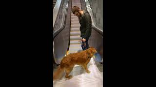 Dog scared of escalator | Kholo.pk