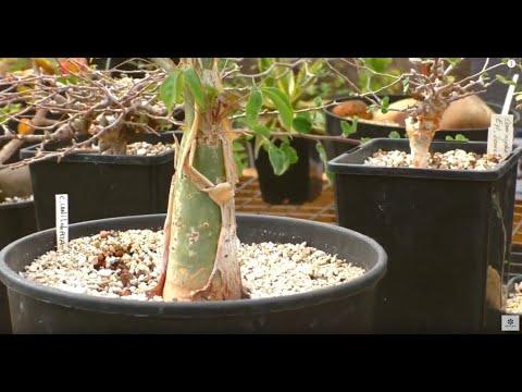 Питомник растений для бонсай.