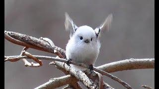 Không ngờ loài chim nhỏ bé xinh đẹp này lại có thể xây dựng một cái tổ kì công đến vậy