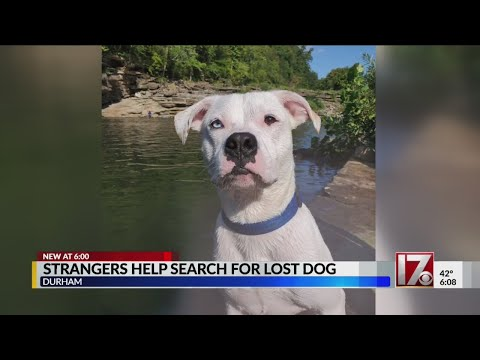 Strangers help man search for missing dog in Durham