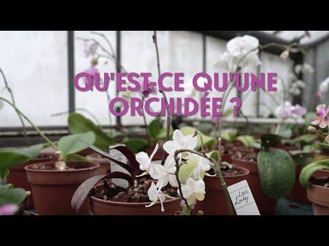 Qu'est ce qu'une orchidée ?