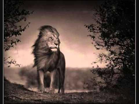 Treading Around The Land - Leões de Israel