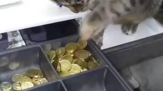 Кот ворует деньги из кассы ПРИКОЛ смотреть ВСЕМ!!!