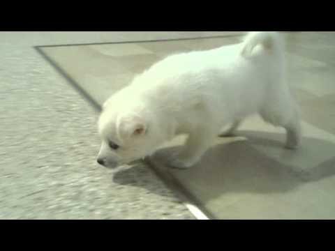 A short video of Buddy