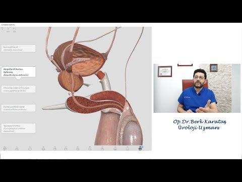 Hogyan lehet javítani az erekció népi gyógymódot