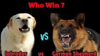 Labrador VS German Shepherd | Who Win The Fight ? | Challenge In Hindi  - Dogs Biography.