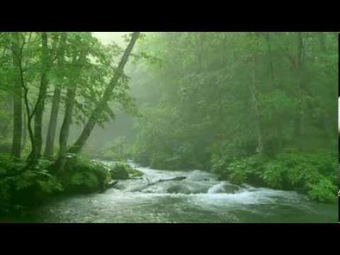 Lắng nghe âm thanh của núi rừng!
