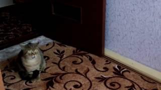 Кот не поделил территорию с котом из соц .сети !!!