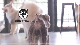 SistaCafe Channel : พาเที่ยวคาเฟ่น้องหมา Dog in Town