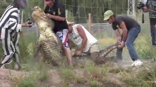 Gatorfest 2009 Alligator Wrestling Competition Highlights