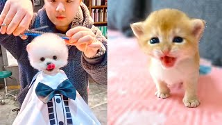Cutest & Funniest Pets - Best Of The 2021 Funny Cats 😺, Dogs 🐶 & Animals Video 😁 😂😍