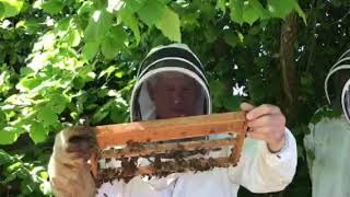 Apiary Meeting on 19 May 2018