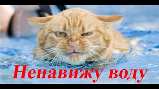 Приколы 2017 лучшие Коты не любят купаться   😁