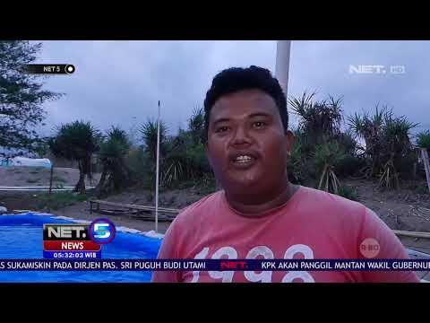 Warga Kebumen Temukan Lumba Lumba Dalam Kondisi Luka Parah   NET5