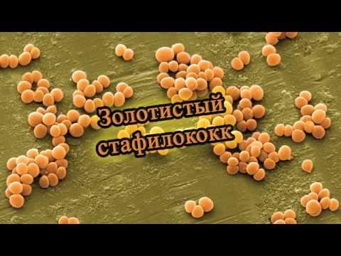 Moknuschtschaja das Ekzem die Behandlung von den Volksmitteln die Rezensionen