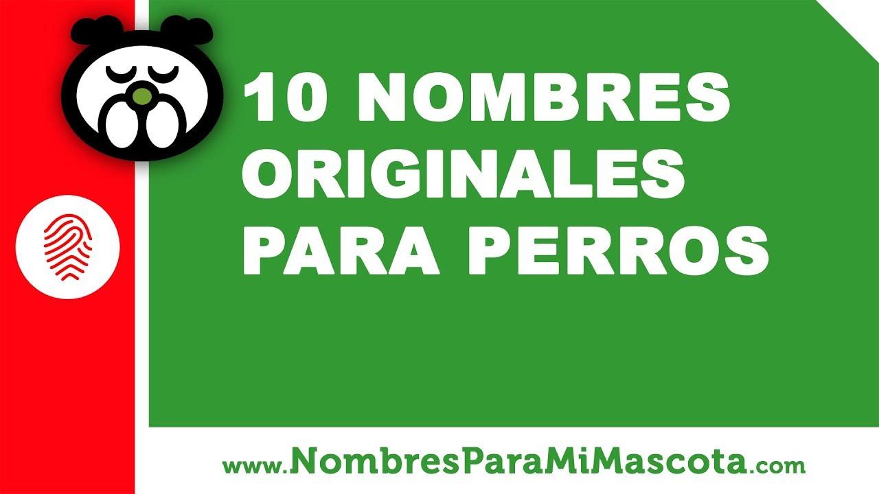10 nombres originales para perros - los mejores nombres de mascota - www.nombresparamimascota.com
