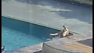 Kermit Fell Into The Pool
