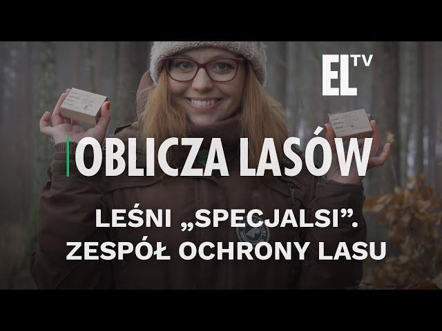 Pronunție video a lasów państwowych în Poloneză