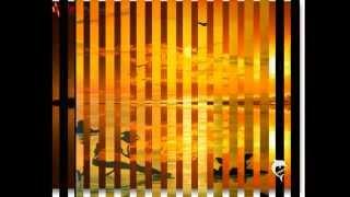 Glen Campell-Sunflower