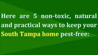 5 Natural Ways to Keep Your South Tampa Home Pest Proof