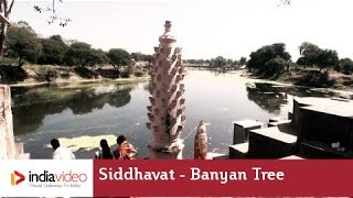 Siddhavat - A Sanctified Banyan Tree