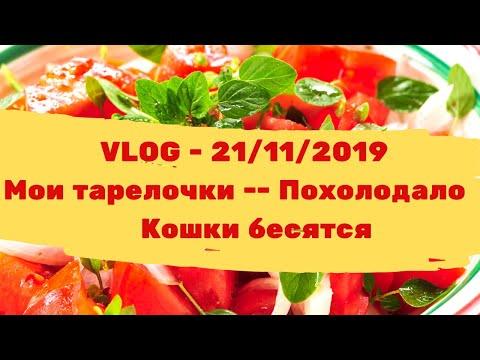 VLOG - 21/11/2019 - Мои тарелочки // Похолодало // Кошки бесятся