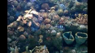 preview picture of video 'ปลาที่ศูนย์แสดงสัตว์น้ำศรีสะเกษ'